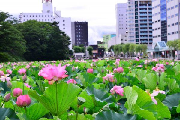 夏ならではの自然を満喫する秋田のおすすめ観光スポット