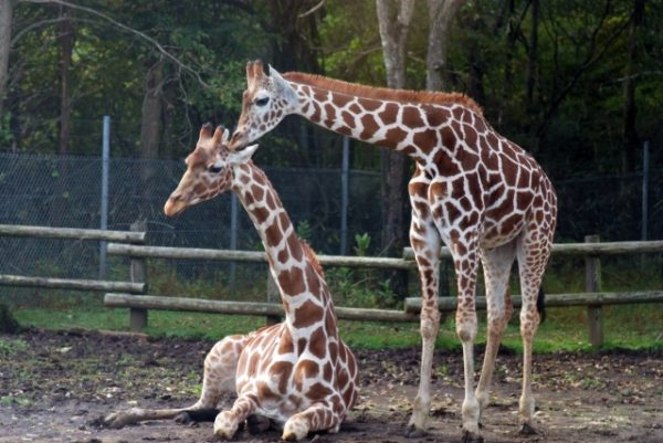 自然や動物と触れ合う体験ができる子供連れにおすすめの福島観光スポット